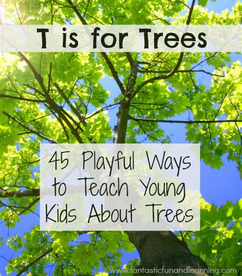 tree activities for 702 | 45 Playful Ways to Teach Young Kids About Trees