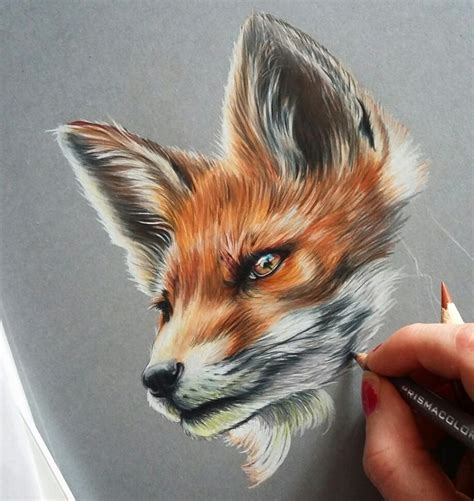 prismacolor realistic fox drawing fox  art drawing