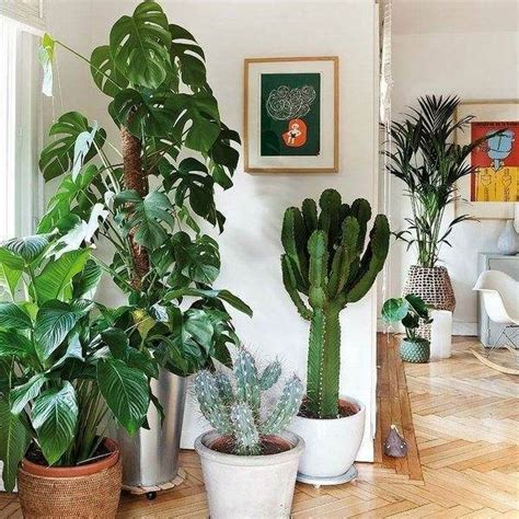 flowers to grow indoors easy flowers to grow indoors a useful guide for indoor gardening