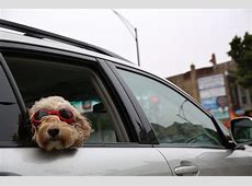 Best new cars for dog owners, according to Autotrader