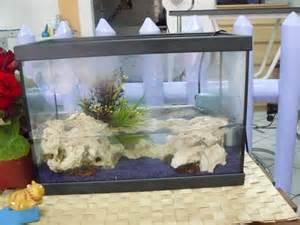 crabe en aquarium eau douce