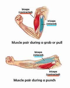 06 Legs  Downward Gravitational Pull