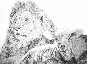 The Lion And The Lamb Drawing by Bryan Bustard