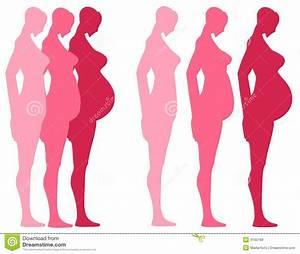 Schwangerschaft 3 Trimester : 3 trimester der schwangerschaft vektor abbildung illustration von zuerst zweitens 4165168 ~ Frokenaadalensverden.com Haus und Dekorationen