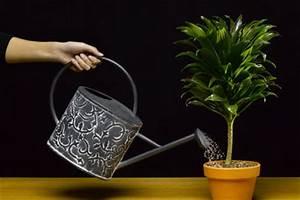 Pflanzen Im Urlaub Bewässern : im urlaub pflanzen bew ssern tipps ~ Markanthonyermac.com Haus und Dekorationen
