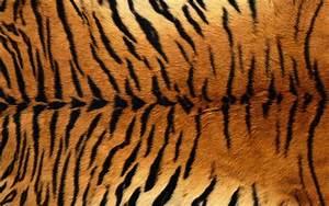 Background Wedding Pics: Background Tiger