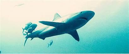 Shark Water Fish Sea Animal Gifs Animated