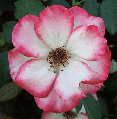 Flowers Pretty Relentless Writings Took Shot Favorite