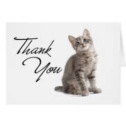 Thank You Kitten