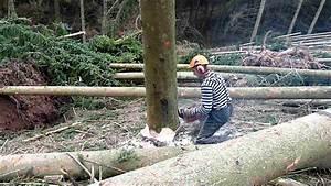 Baum Fällen Technik : baum f llen einfache art mov youtube ~ A.2002-acura-tl-radio.info Haus und Dekorationen