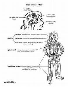 nervous system free here is a free nervous system With here39s a diagram of how a water well system works