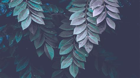27 green aesthetic wallpapers