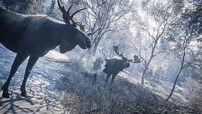 Wild Call Moose Thehunter Hunter Meeting 4k