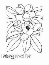 Magnolia Coloring Pages Tree Flower Flowers Template Printable Recommended Colors Mycoloring sketch template