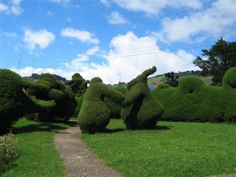 Best Images About Garden-topiary On Pinterest
