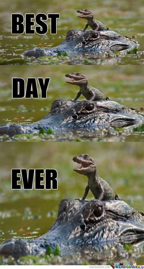 Alligator Meme - alligator memes best collection of funny alligator pictures