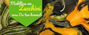 Was Tun Gegen Mehltau : mehltau an zucchini so gehst du richtig dagegen vor ~ Orissabook.com Haus und Dekorationen