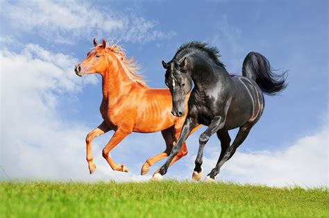 horse animals nature hd desktop wallpapers background animal backgrounds mobile wallup px screen category resolution tags