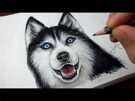 comment dessiner  chien husky tutoriel youtube