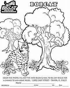 Bobcat Coloring Pages Getcoloringpagescom