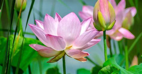 Rnb Saraswati Bunga saraswati temple ubud lotus pond stage for kecak