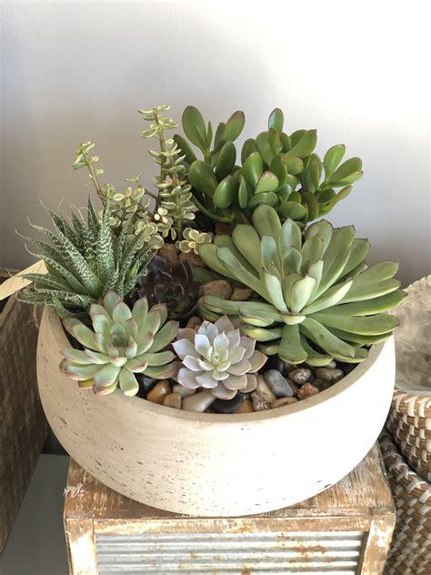 Zen Succulent Garden - Drinkwater Flowers