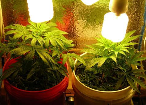 growing weed with fluorescent lights fluorescent grow lights full image for t5 fluorescent