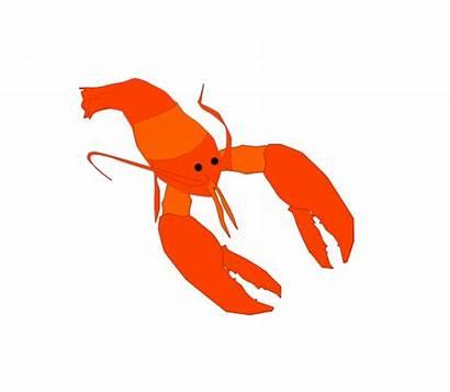 Lobster Penobscot Bay