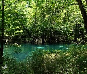 Northwest Florida Water Management District adopts budget ...