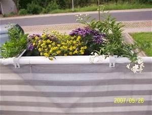 Balkonpflanzen Sonnig Pflegeleicht : anspruchslose pflegeleichte balkonpflanzen haus garten forum ~ Frokenaadalensverden.com Haus und Dekorationen