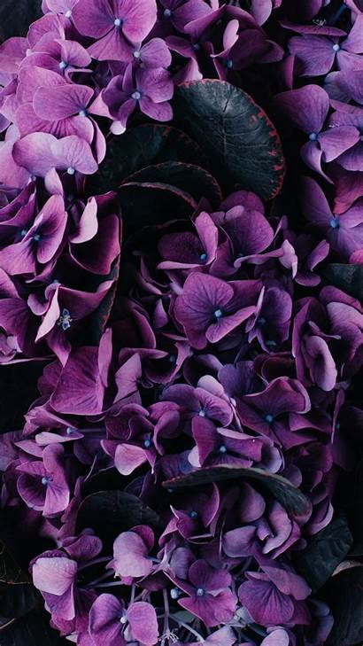 Iphone Floral Flowers Wallpapers Flower Purple Backgrounds
