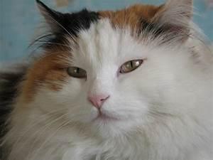 Cat28c16aw