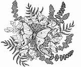 Moth Luna Coloring Note Deviantart Quince Golden Card Tattoo Template Eva Deer Thank Adult Inspiration Enregistree Depuis sketch template
