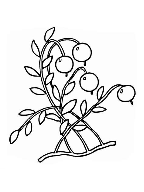 cranberry coloring pages   print cranberry coloring pages