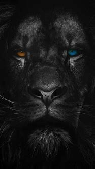 Pin de marvellouslines em WILD ANIMAL WALLPAPERS   Imagens ...