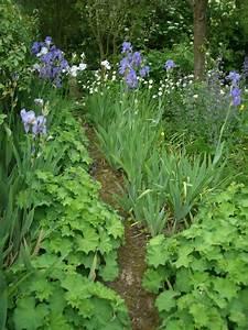 Plantes D Ombre Extérieur : jardin l 39 ombre quelles plantes cultiver dans un jardin ~ Melissatoandfro.com Idées de Décoration