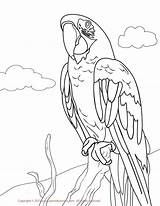 Macaw Coloring Pages Drawing Printable Parakeet Bird Scarlet Draw Greenwing Hawk Parrot Hyacinth Macaws Drawings Flying Chain Designlooter Getcolorings Toys sketch template