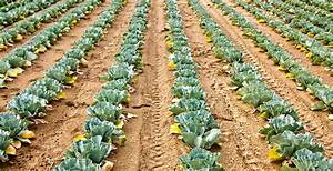 Vegetable Garden Yields To Expect On Average Per 10039 Row