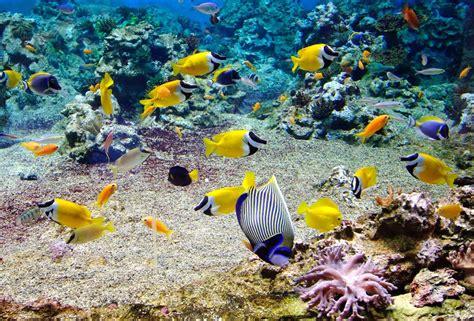meuble cuisine massif les poissons de polynésie arts et voyages