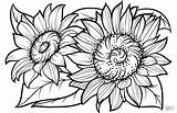 Sunflower Coloring Sunflowers Pages Printable Flower Supercoloring Adults Flowers Sheets Adult Clipart Drawing Svg Books Super sketch template