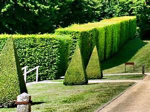 Quand Tailler Les Arbustes De Haies : taille des arbustes quand et comment tailler les arbustes ~ Dode.kayakingforconservation.com Idées de Décoration
