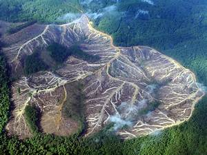 Amazon Rainforest Deforestation: Deforestation History