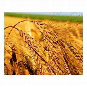 Какие пить травы от потенции