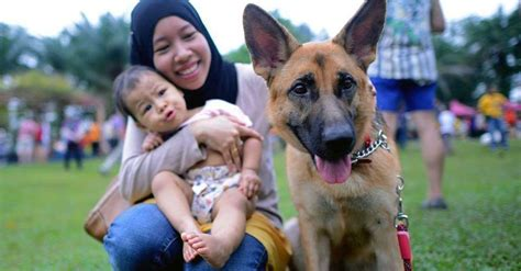 malaysias    touch  dog event popular