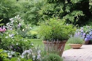 Pflanzen Immergrün Winterhart : winterharte pflanzen tipps im meister meister blog ~ Markanthonyermac.com Haus und Dekorationen