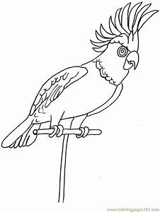 Tropical Birds Coloring Pages - Coloring Home