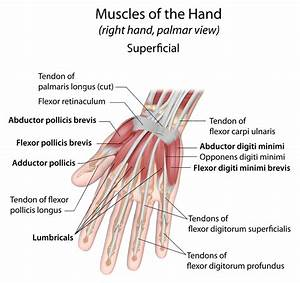 Wrist Injuries  Science Of Intersection Syndrome