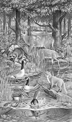 46 Best deer coloring pages images | Deer coloring pages