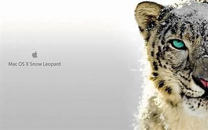 Leopard Apple Os Mac Snow Desktop Background