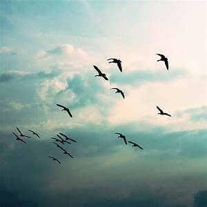 Birds Flying Away Wallpaper